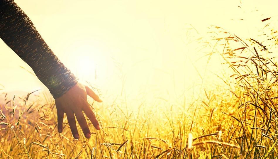 摩爾門教信仰:恩典與行為