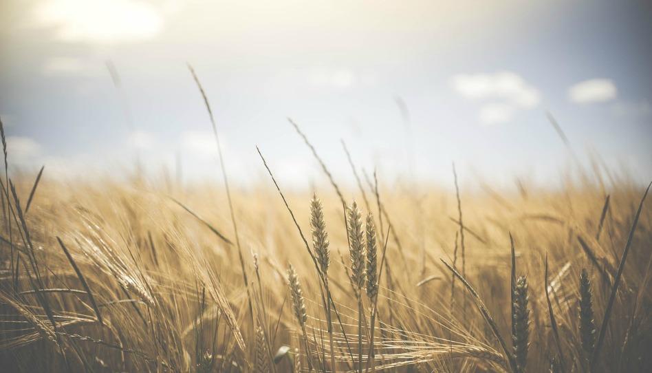 「田地已經白得可以收穫了」── 傳道事工