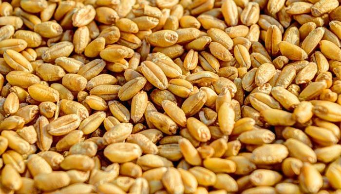 食物儲藏: 種子的收成與儲藏