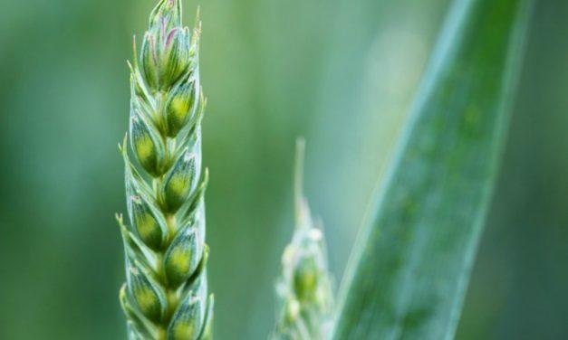李海的夢:何謂生命的種子?