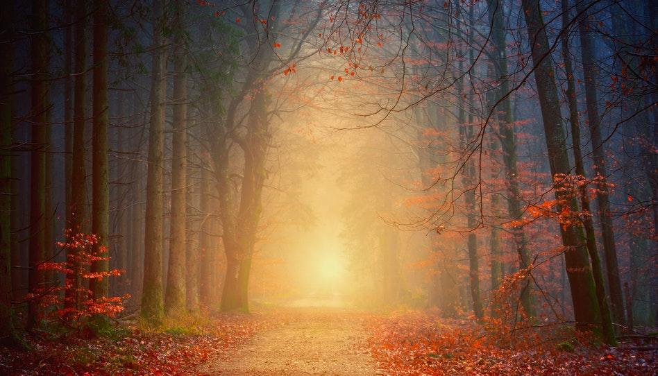 尋找真理的道路